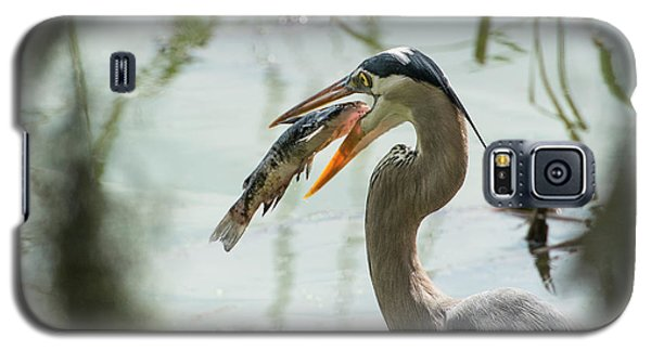 Catfish Galaxy S5 Case - Great Blue Heron With Fish In Mouth by Sheila Haddad