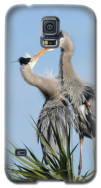 Great Blue Herons At Nest Kissing Galaxy S5 Case