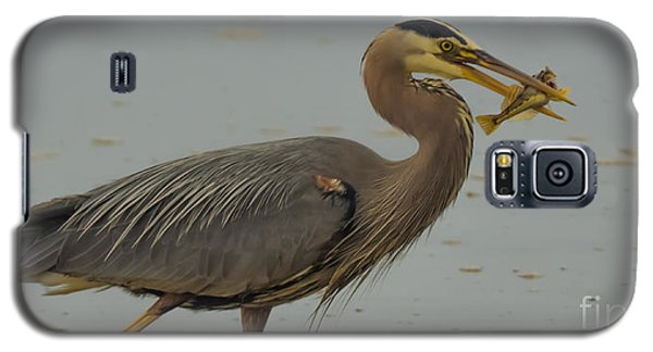 Great Blue Herron Eating Fish Galaxy S5 Case