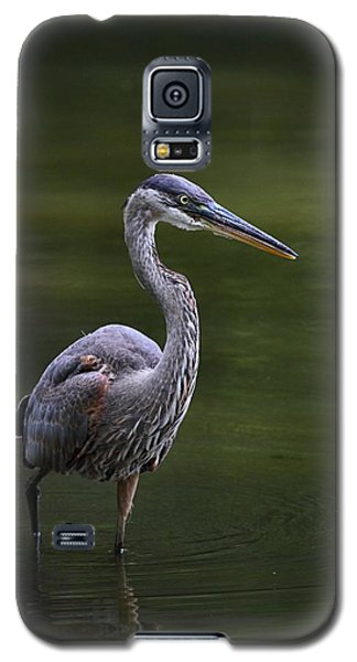 Great Blue Stalking Galaxy S5 Case by Mike Farslow