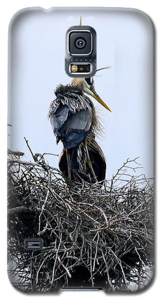 Great Blues Galaxy S5 Case