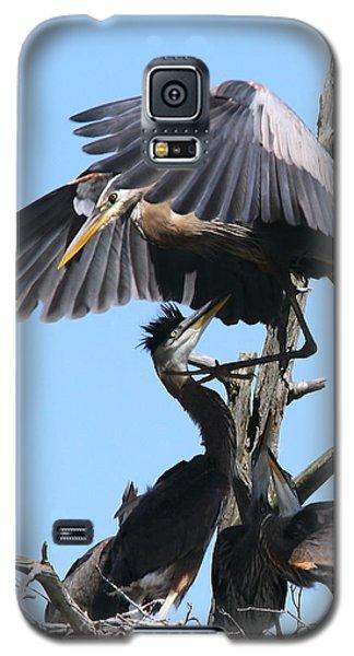 Great Blues II Galaxy S5 Case