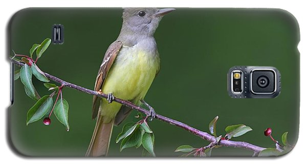 Galaxy S5 Case featuring the photograph Great Crested Flycatcher by Daniel Behm