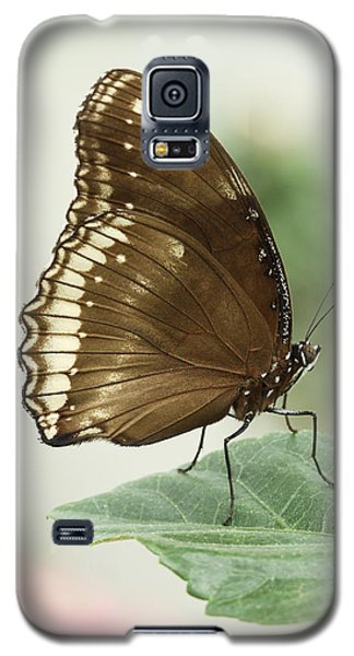 Great Eggfly Butterfly Galaxy S5 Case by Judy Whitton