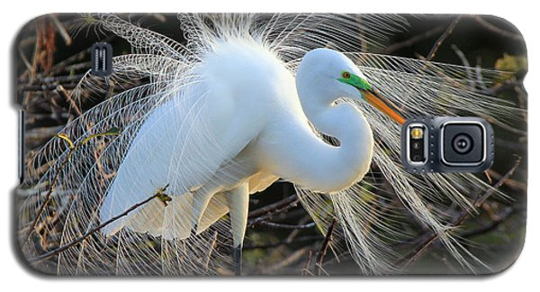 Great Egret Show Off Galaxy S5 Case