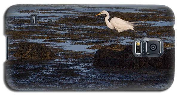 Great Egret At Avery Point Galaxy S5 Case
