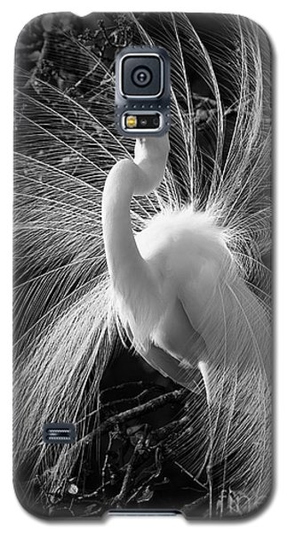 Galaxy S5 Case featuring the photograph Plumes In The Wind by John F Tsumas