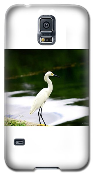Galaxy S5 Case featuring the photograph Great Egret by Debra Forand