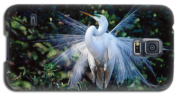 Galaxy S5 Case featuring the photograph Great Egret Displaying Plumes by Bradford Martin