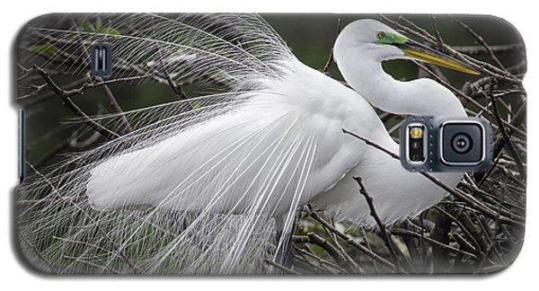 Great Egret Preening Galaxy S5 Case