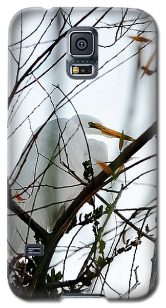 Great Egret Roosting In Winter Galaxy S5 Case