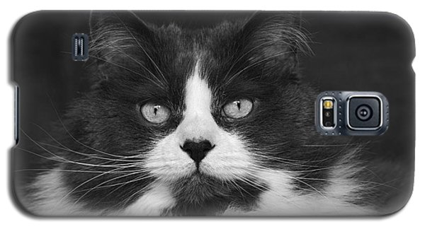 Great Gray Cat Galaxy S5 Case