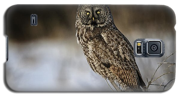 Great Gray Owl 2 Galaxy S5 Case