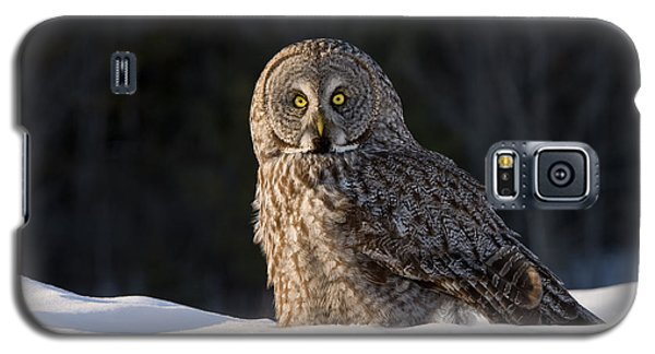 Great Gray Owl In Snow Galaxy S5 Case