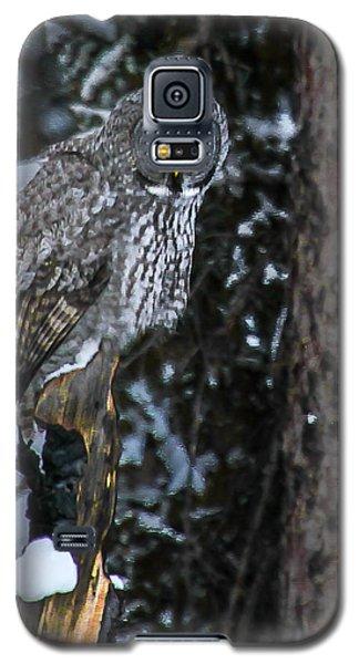 Great Grey Galaxy S5 Case