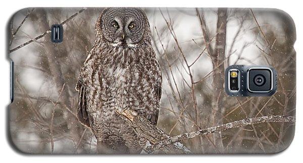 Great Grey Owl Galaxy S5 Case by Eunice Gibb