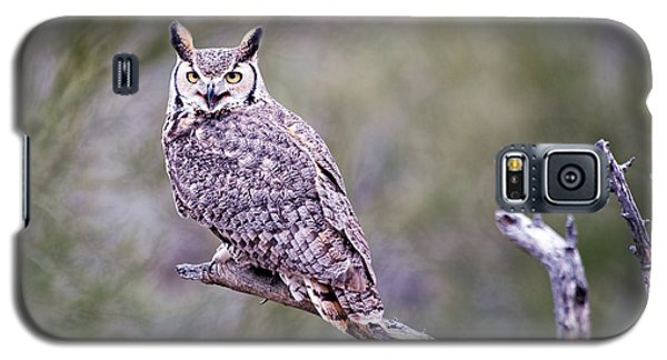 Galaxy S5 Case featuring the photograph Great Horned Owl by Dan McManus