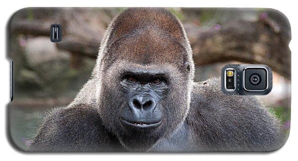 Galaxy S5 Case featuring the photograph Great Silverback Gorilla - Sim Sim by John Black