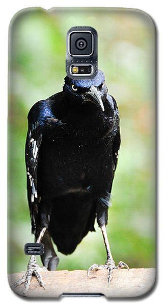 Great Tailed Grackle Galaxy S5 Case