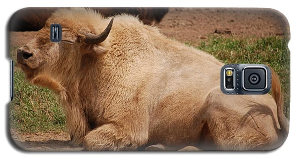 Galaxy S5 Case featuring the photograph Great White Buffalo by Mark McReynolds