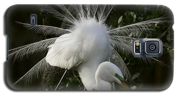 Galaxy S5 Case featuring the photograph Great White Egret Displaying by Myrna Bradshaw