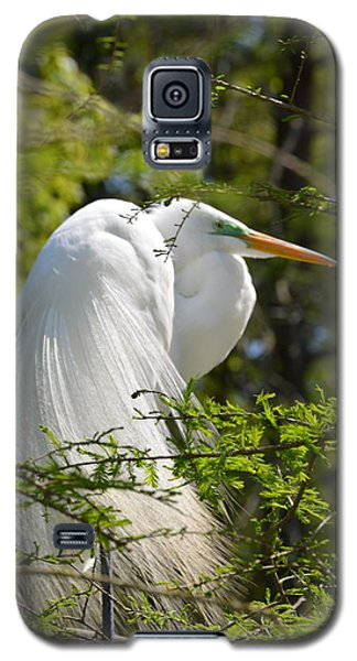 Galaxy S5 Case featuring the photograph Great White Egret On Nest by Judith Morris