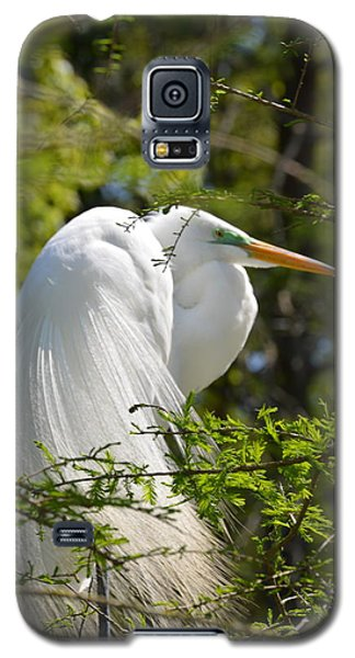 Great White Egret On Nest Galaxy S5 Case