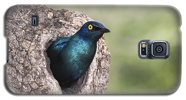 Greater Blue-eared Glossy-starling Galaxy S5 Case