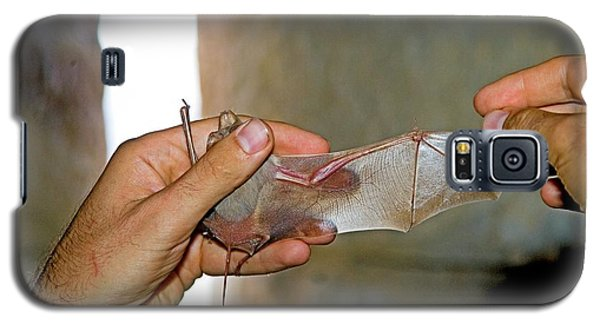 Greater Mouse-tailed Bat Galaxy S5 Case by Photostock-israel