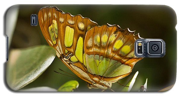 Green And Brown Tropical Butterfly Galaxy S5 Case