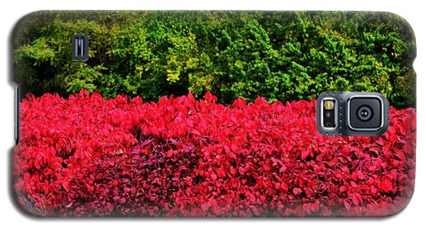 Green And Red Autumn Galaxy S5 Case by P Dwain Morris