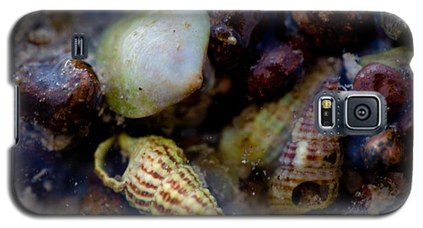 Galaxy S5 Case featuring the photograph Green And White Shell by Carole Hinding