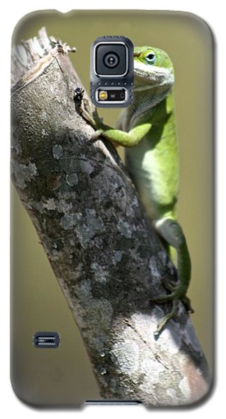 Galaxy S5 Case featuring the photograph Green Anole Ready For Lunch by Jeanne Kay Juhos