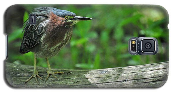 Green Backed Heron At The Swamp Galaxy S5 Case by Rebecca Sherman