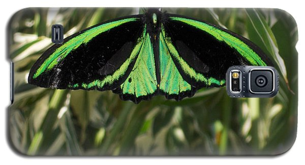 Galaxy S5 Case featuring the photograph Green Butterfly by Brenda Brown