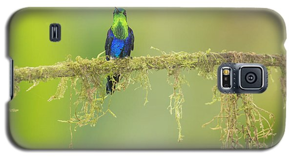 Galaxy S5 Case featuring the photograph Green-crowned Woodnymph Hummingbird by Dan Suzio