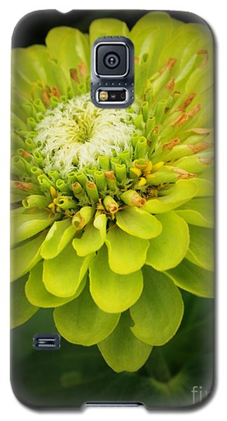 Green Dahlia Galaxy S5 Case by Deborah Fay
