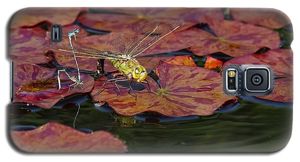 Galaxy S5 Case featuring the photograph Green Darner Dragonfly With Friends by Rona Black