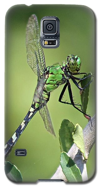 Galaxy S5 Case featuring the photograph Green Dragonfly Eastern Ponhawk by Jeanne Kay Juhos