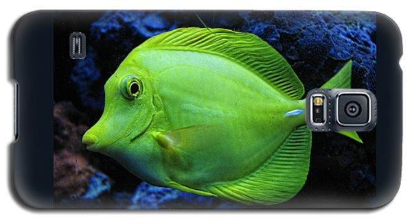 Green Fish Galaxy S5 Case