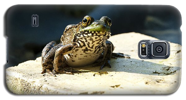 Galaxy S5 Case featuring the photograph Green Frog - Lookin At Yah by Janice Adomeit