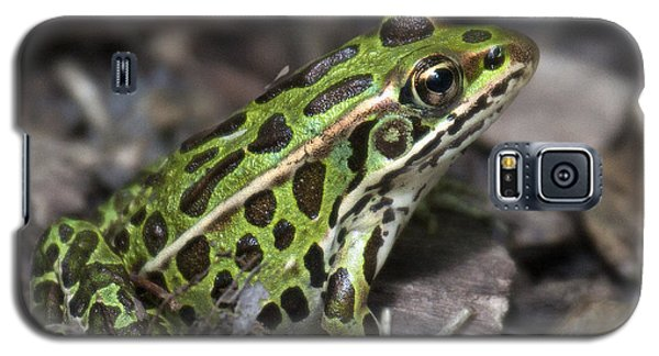 Galaxy S5 Case featuring the photograph Green Frog by Timothy McIntyre