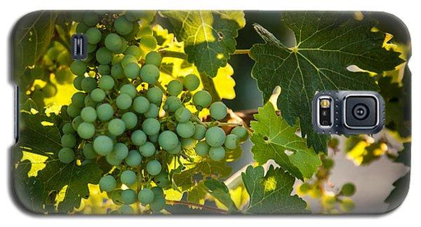Green Grapes Galaxy S5 Case by Ana V Ramirez
