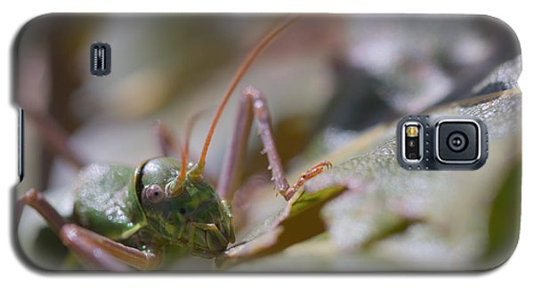 Galaxy S5 Case featuring the photograph Green Grasshopper Ephippiger by Jivko Nakev