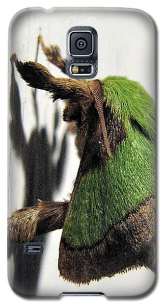 Green Hair Moth Galaxy S5 Case