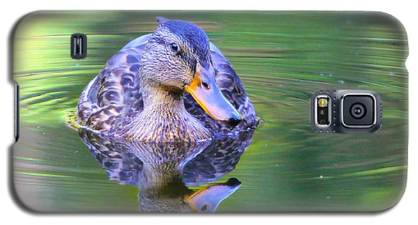 Green-headed Duck At Sunset Galaxy S5 Case by Jivko Nakev