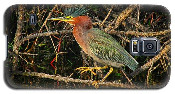 Green Heron Basking In Sunlight Galaxy S5 Case