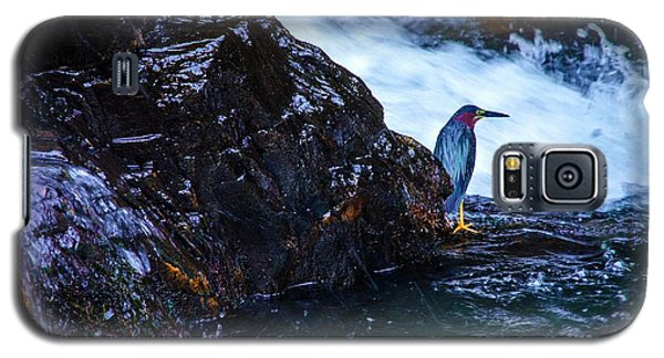 Galaxy S5 Case featuring the photograph Green Heron Blue During Mating by Lori Miller