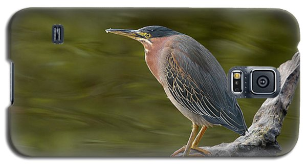 Galaxy S5 Case featuring the photograph Green Heron by Doug Herr