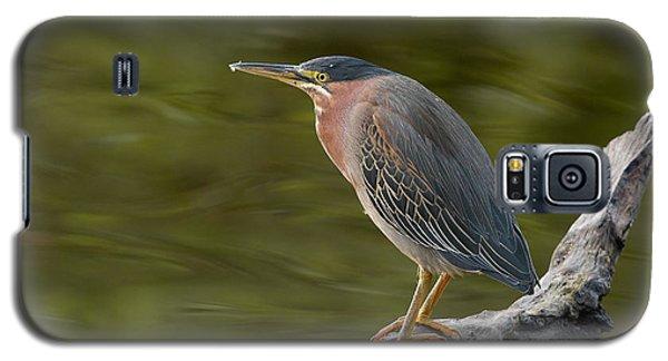 Green Heron Galaxy S5 Case by Doug Herr